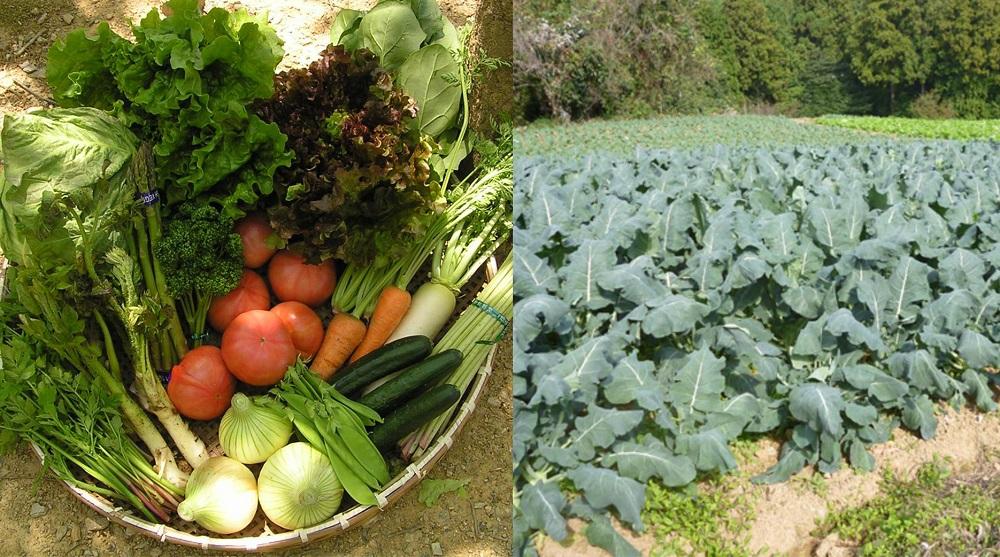 特売所に出荷されている新鮮野菜